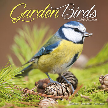 Calendário 2019  Garden Birds