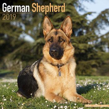 Calendário 2019  German Shepherd