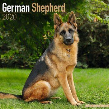 Calendário 2020  German Shepherd