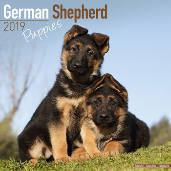 Calendário 2019  German Shepherd Puppies