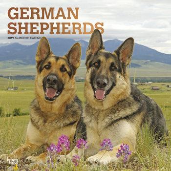 Calendário 2019  German Shepherds