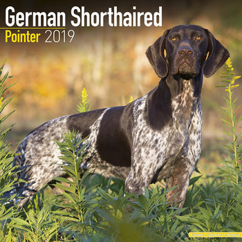 Calendário 2019  German ShortHair Pointer