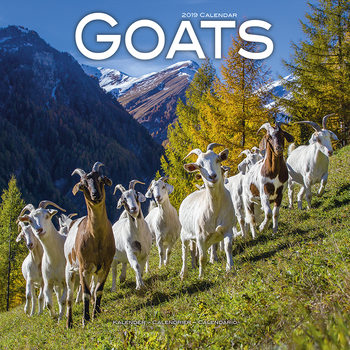 Calendário 2019  Goats