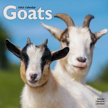 Calendário 2020  Goats
