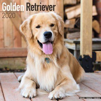 Calendário 2020  Golden Retriever