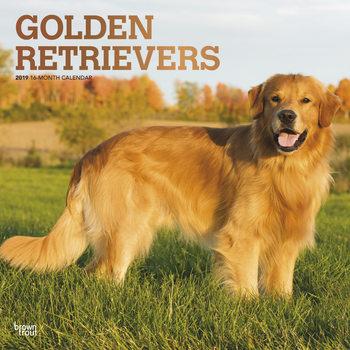 Calendário 2019  Golden Retrievers