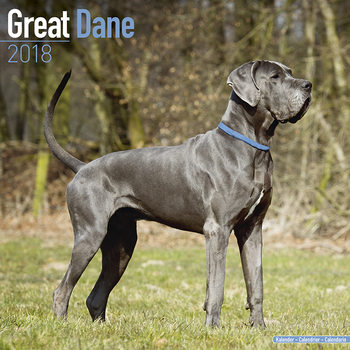 Calendário 2018 Great Dane