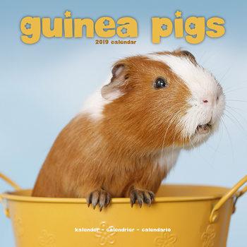 Calendário 2019  Guinea Pigs