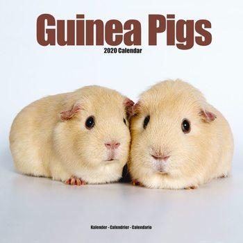 Calendário 2020  Guinea Pigs