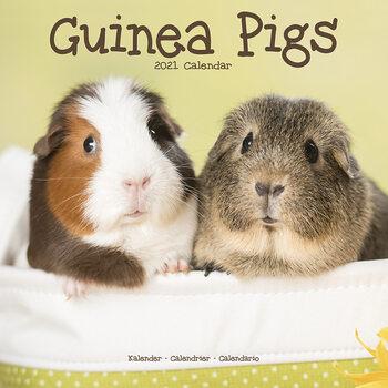 Calendário 2021 Guinea Pigs