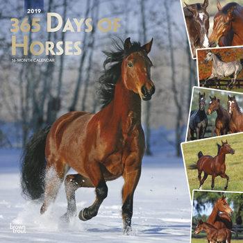 Calendário 2019  Horses - 365 Days Of