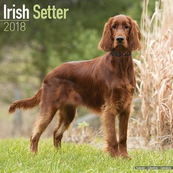 Calendário 2018 Irish Setter