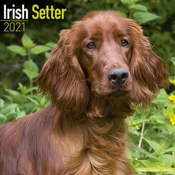 Calendário 2021 Irish Setter