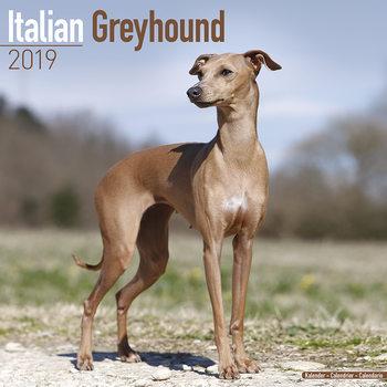 Calendário 2019  Italian Greyhound