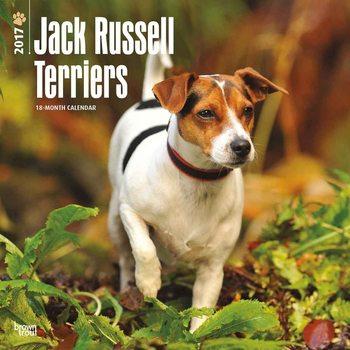 Calendário 2017 Jack Russell