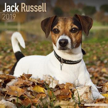 Calendário 2019  Jack Russell