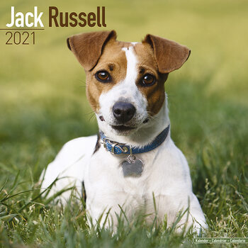 Calendário 2021 Jack Russell