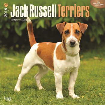 Calendário 2021 Jack Russell Terriers