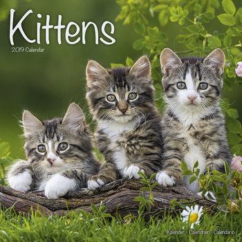 Calendário 2019  Kittens