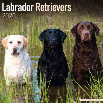 Calendário 2020  Labrador Ret – Mix