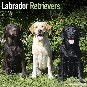Calendário 2019  Labrador Ret (Mixed)