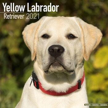 Calendário 2021 Labrador Ret (Yellow)