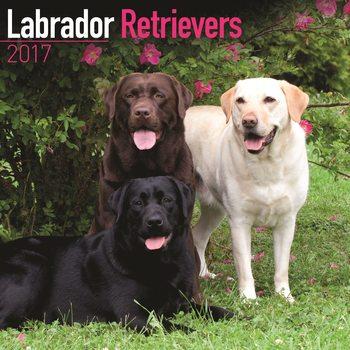 Calendário 2017 Labrador Retriever