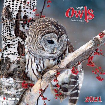 Calendário 2021 Magic Owls