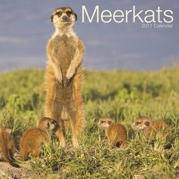 Calendário 2017 Meerkats