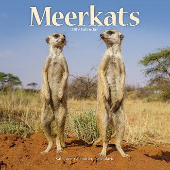 Calendário 2019  Meerkats