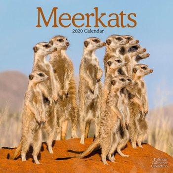 Calendário 2020  Meerkats