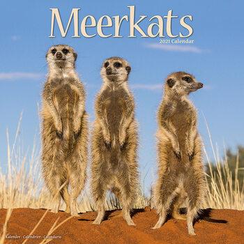 Calendário 2021 Meerkats