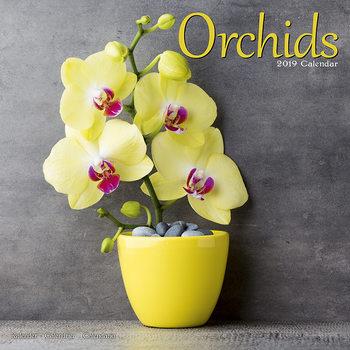Calendário 2019  Orchids