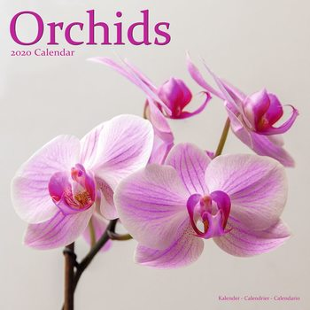 Calendário 2020  Orchids