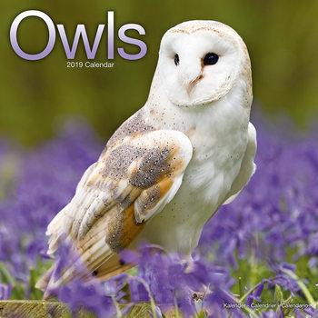 Calendário 2019  Owls