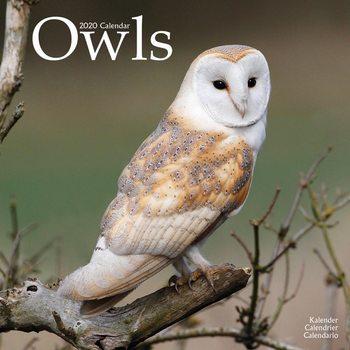 Calendário 2020  Owls