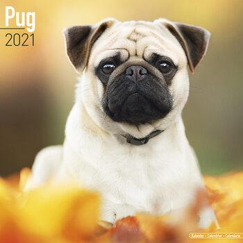 Calendário 2021 Pug
