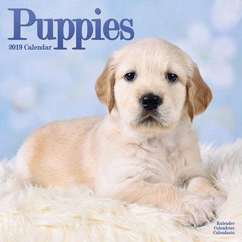 Calendário 2019  Puppies