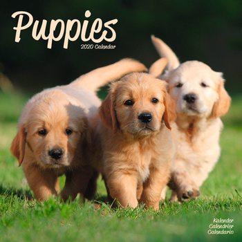 Calendário 2020  Puppies