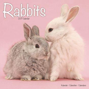 Calendário 2017 Rabbits