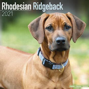 Calendário 2021 Rhodesian Ridgeback