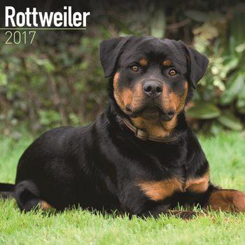 Calendário 2017 Rottweiler