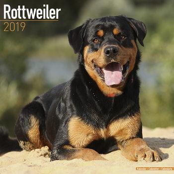 Calendário 2019  Rottweiler