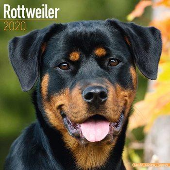 Calendário 2020  Rottweiler