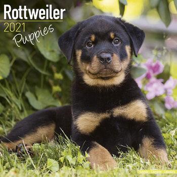 Calendário 2021 Rottweiler