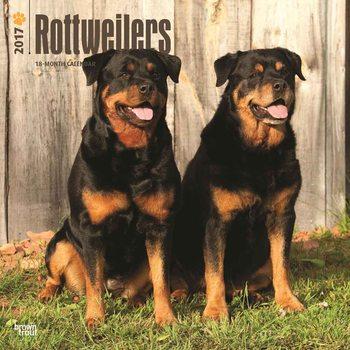 Calendário 2017 Rottweilers