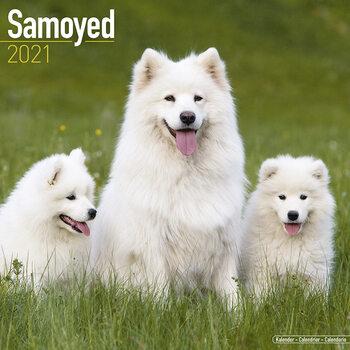 Calendário 2021 Samoyed