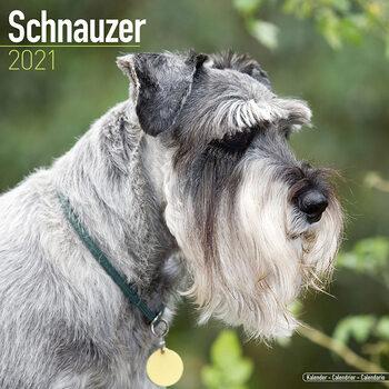 Calendário 2021 Schnauzer