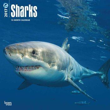 Calendário 2017 Sharks