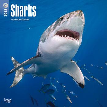 Calendário 2018 Sharks